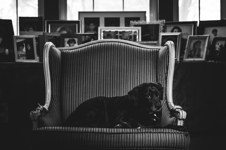 Dog by jacob giampa