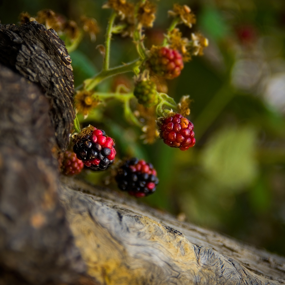 Berries by the River by Kristopher Schmidt