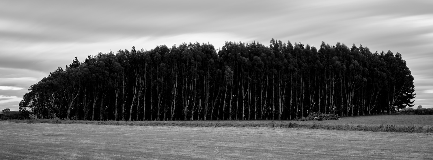 Trees by P K