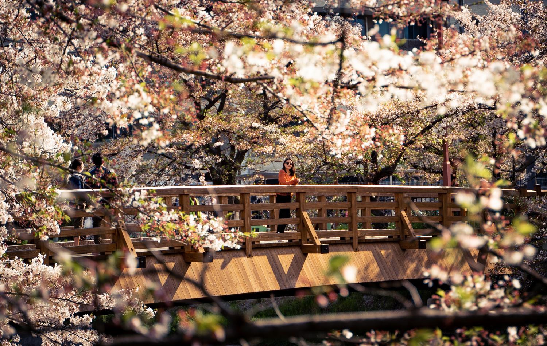 Chasing Sakura in Japan by Joseph Nguyen