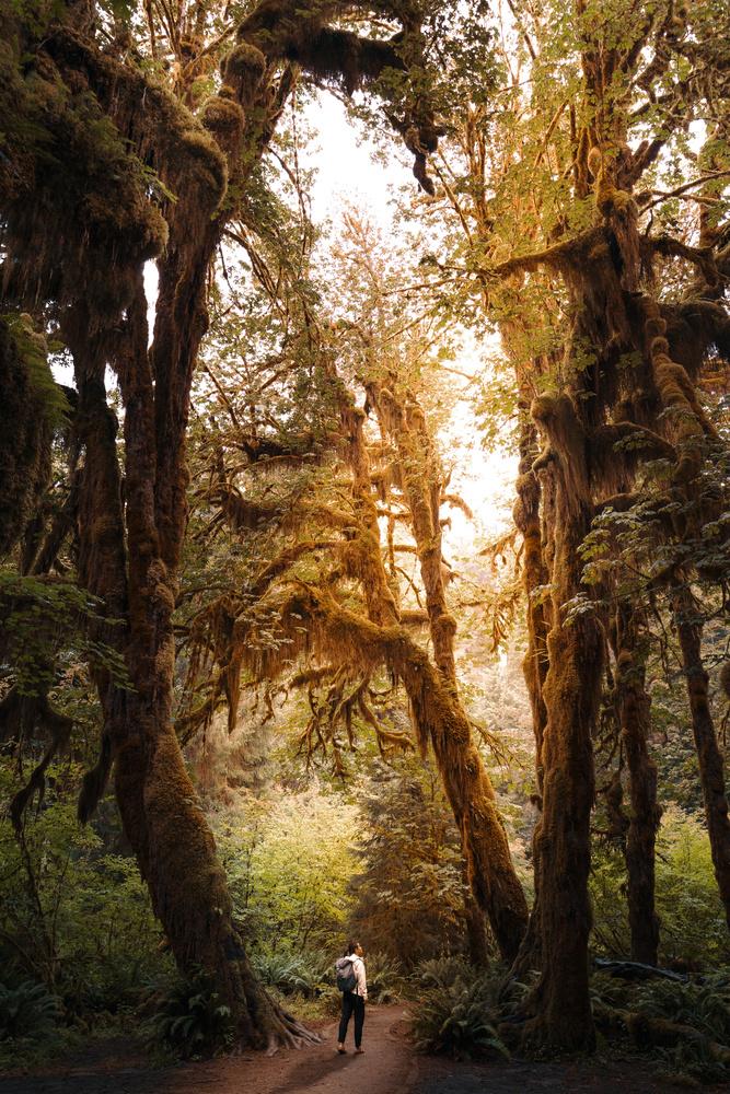 Kingdom of Moss by Joseph Nguyen