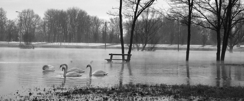 Swan river pan b/w by Amir Jasarevic