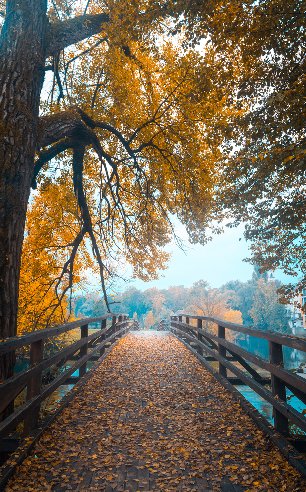 Golden path by Denis Smajic