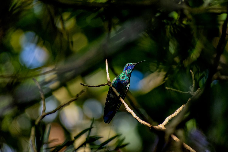 Hummingbird by james` yakscoe