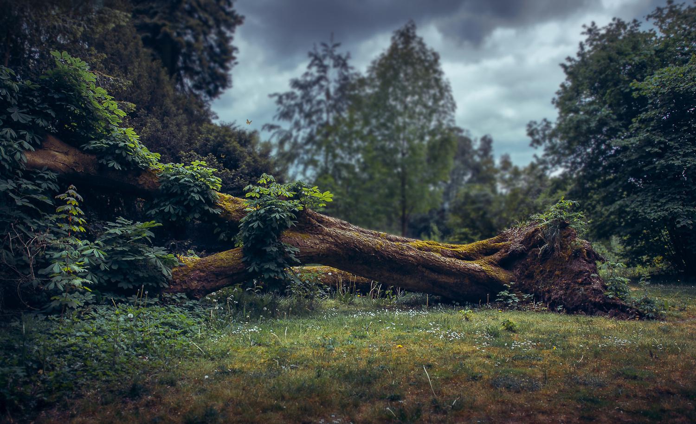 Fallen by Ivo van der Ent