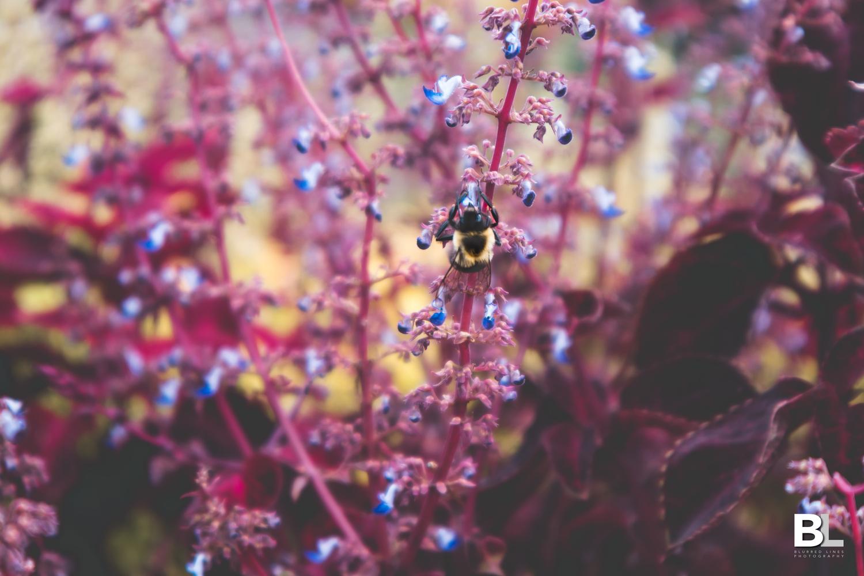 Bee's being bee's by Igor Fedorenko