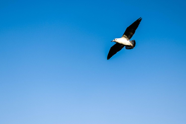 Flying Solo by Alex Walton