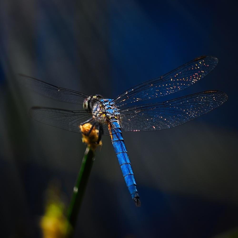 Drogonfly by Garrett Camp