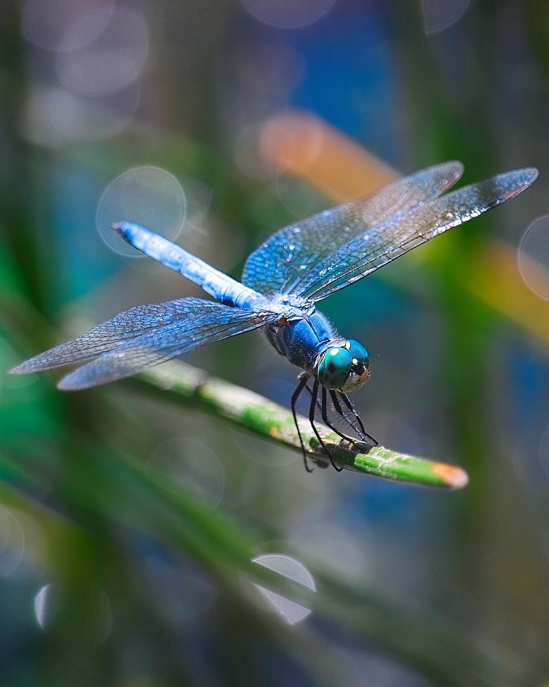 Drogonfly Dos by Garrett Camp