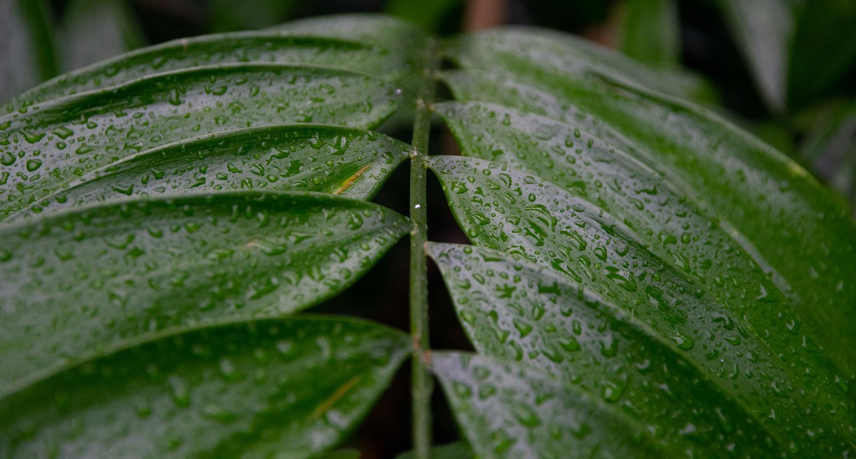 Leaf water drops by Aleksandar Langer