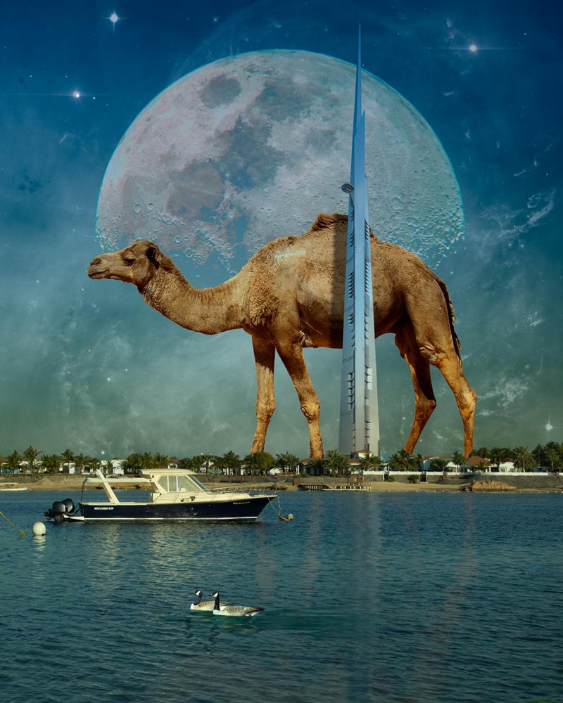 A Rare Camel. by Abdulaziz Albosefi