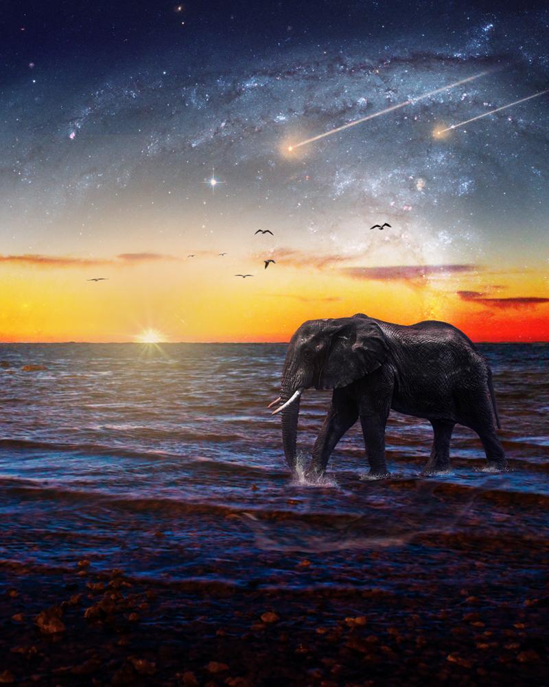 Elephant walking on water. by Abdulaziz Albosefi
