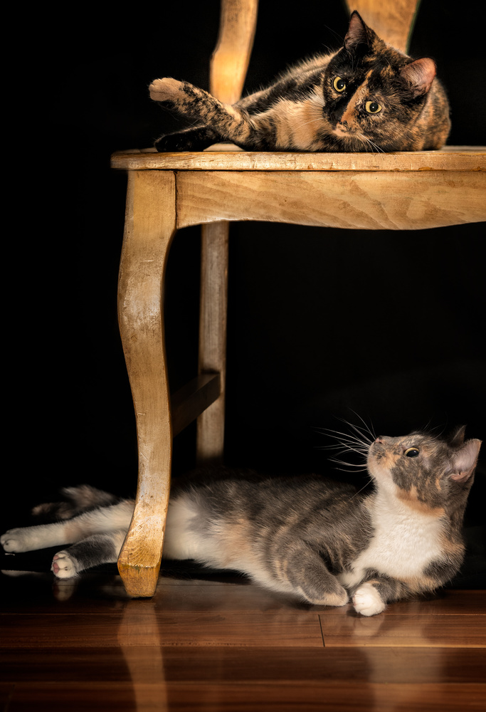 Sisters by Phil Cornwall