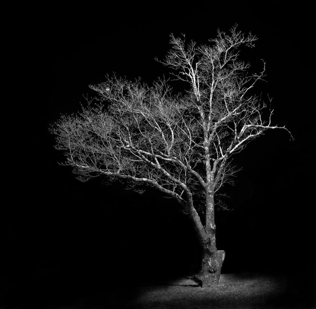 Crazy Tree by James Mason