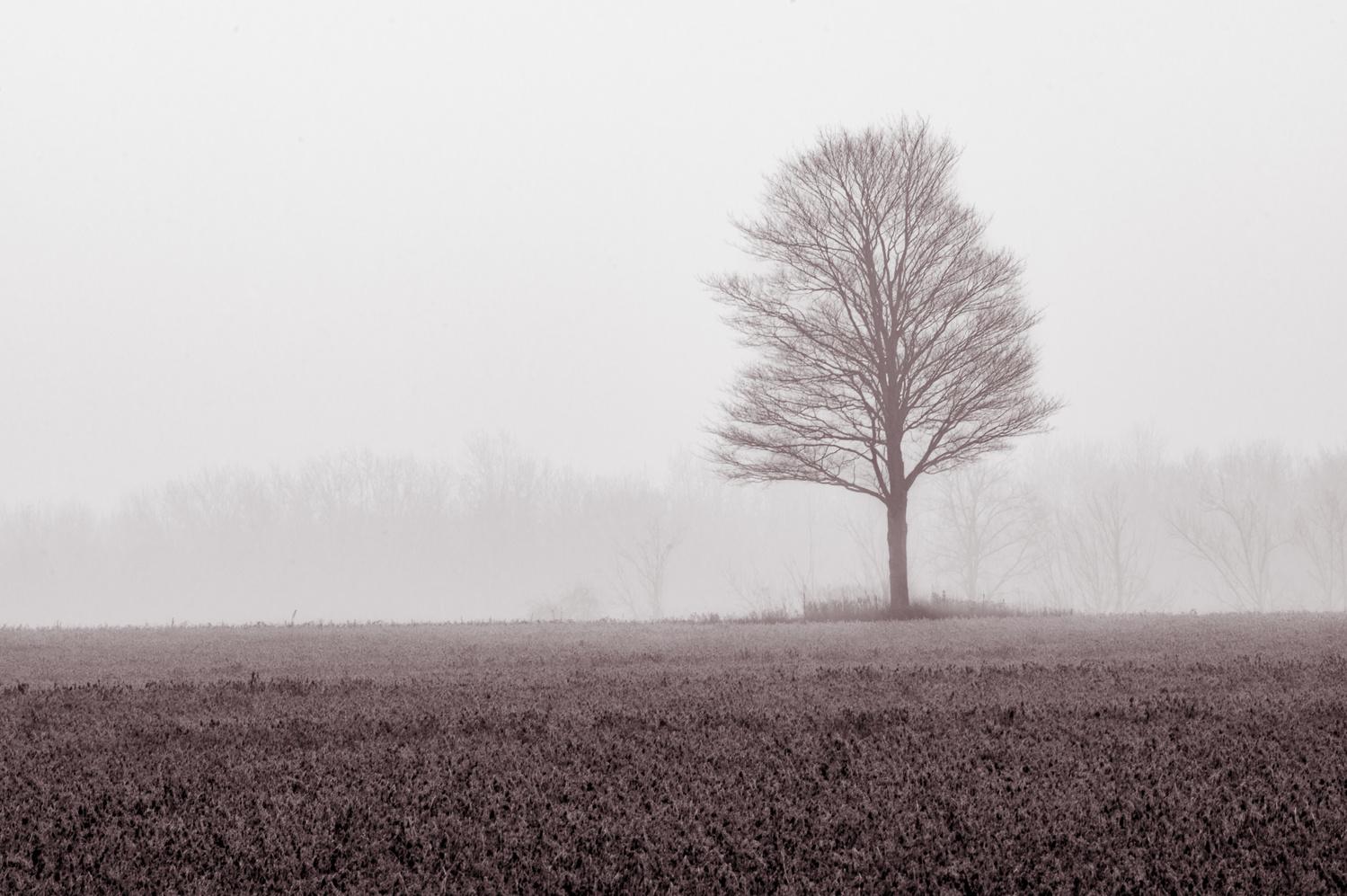 Tree in fog by Jason Orr