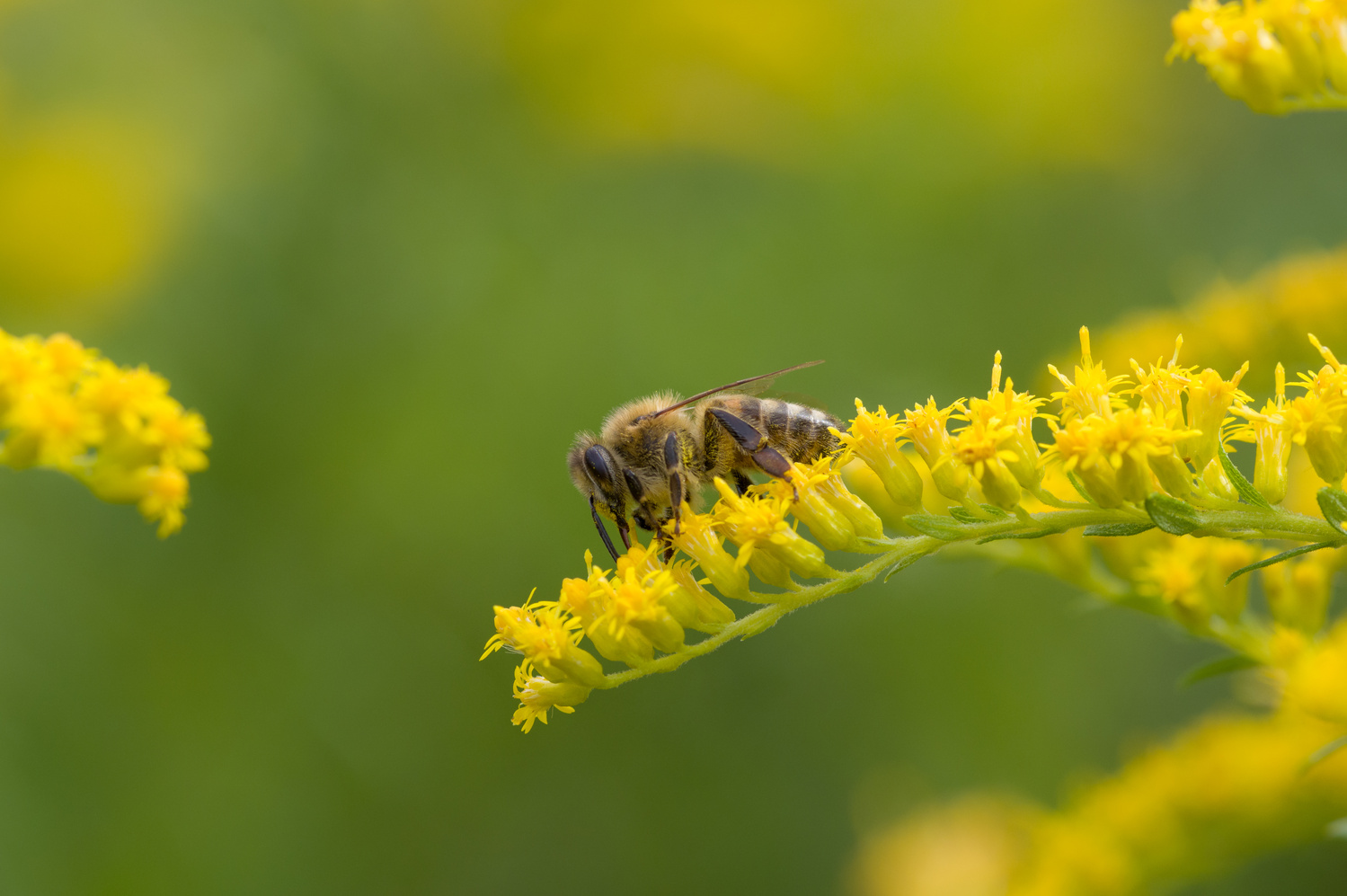 The Bee Photo by Jason Orr