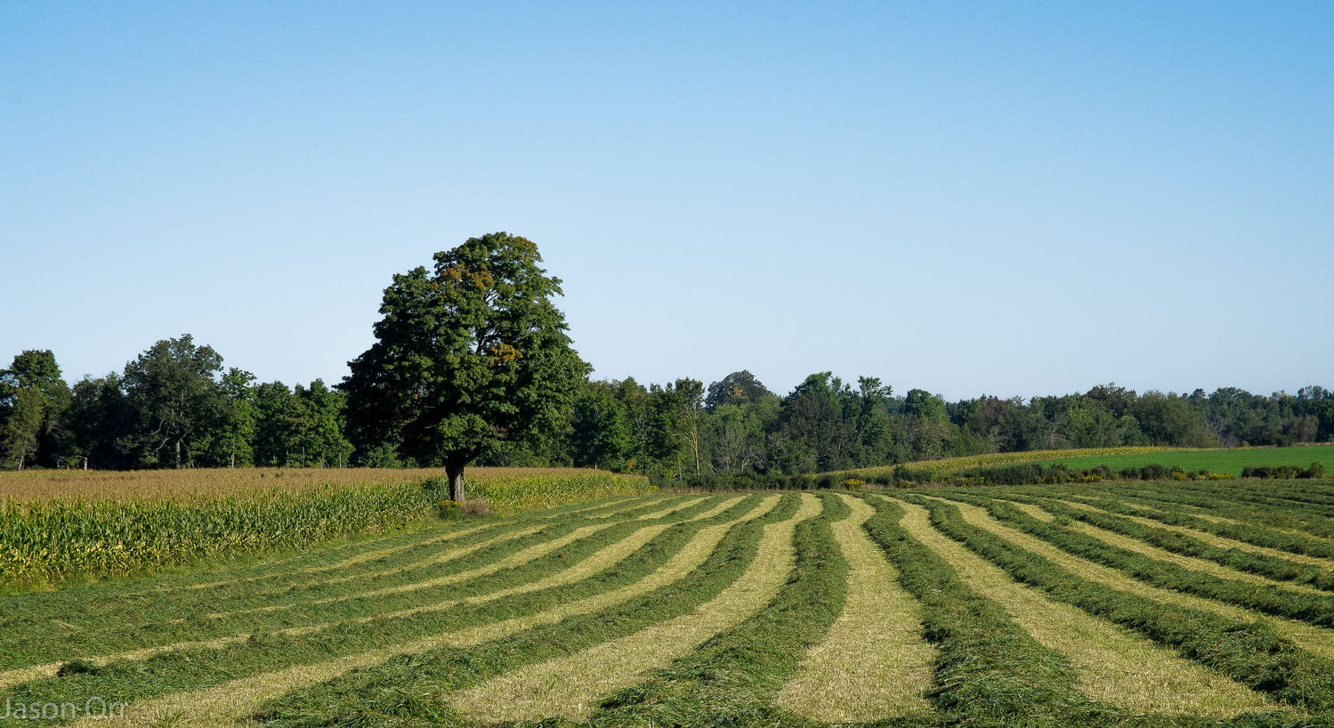Farm Field-Guelph by Jason Orr