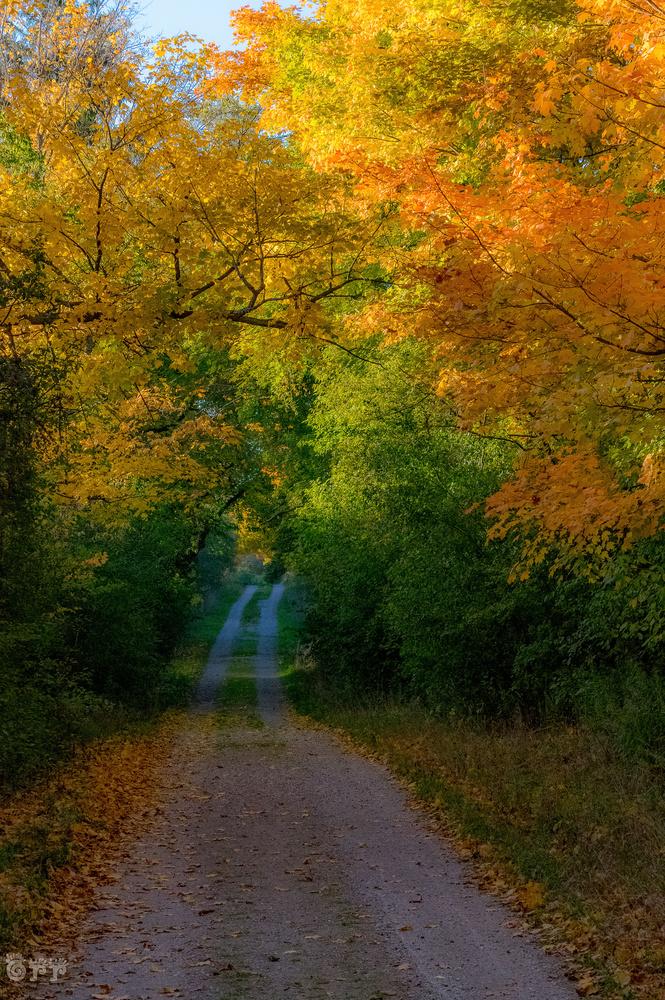 Fall Colors by Jason Orr