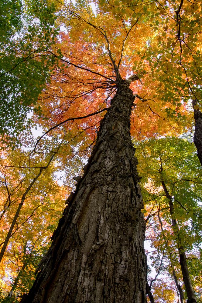 Fall color by Jason Orr