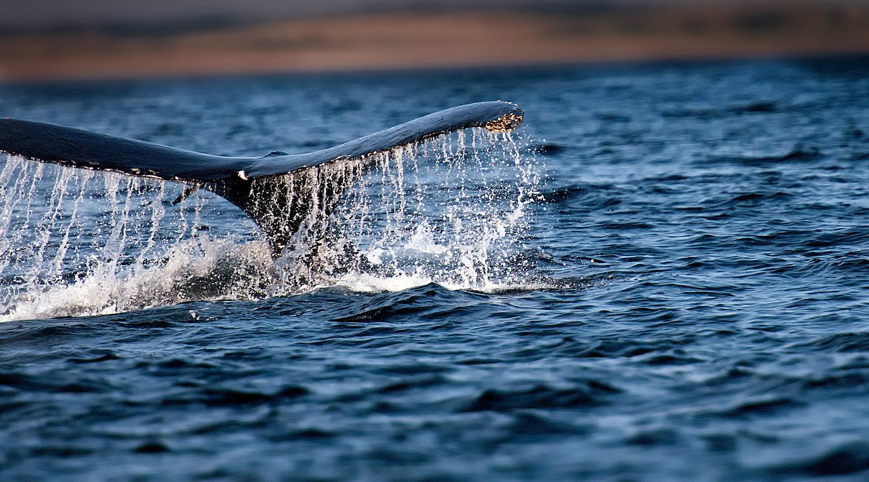 Whale Season by Robert Margereten