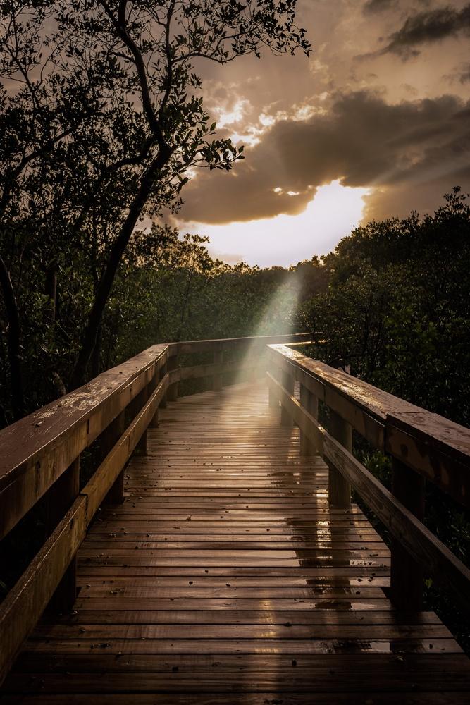 Rays by Cole Aljian