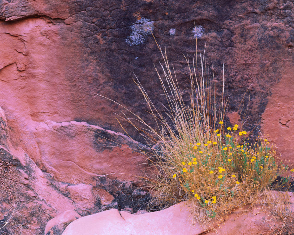 Cliff Bloom by Marty Quinn