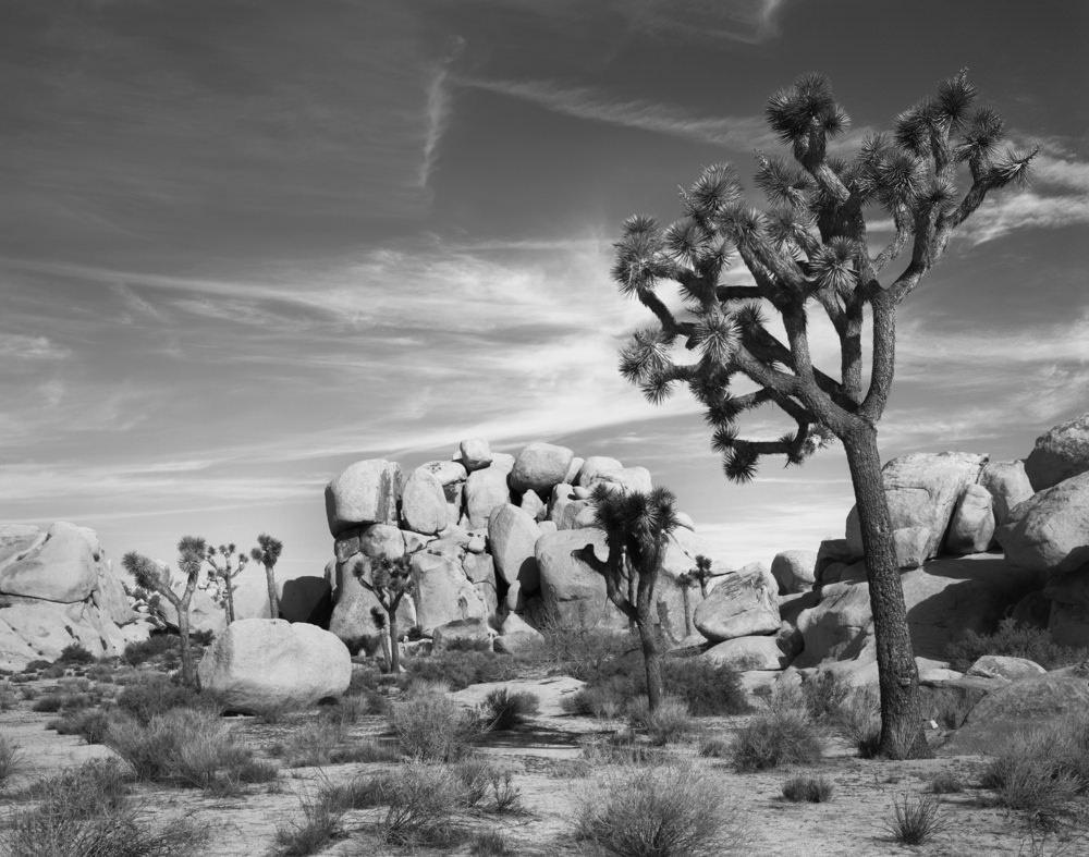 Joshua Tree Rocks by Marty Quinn
