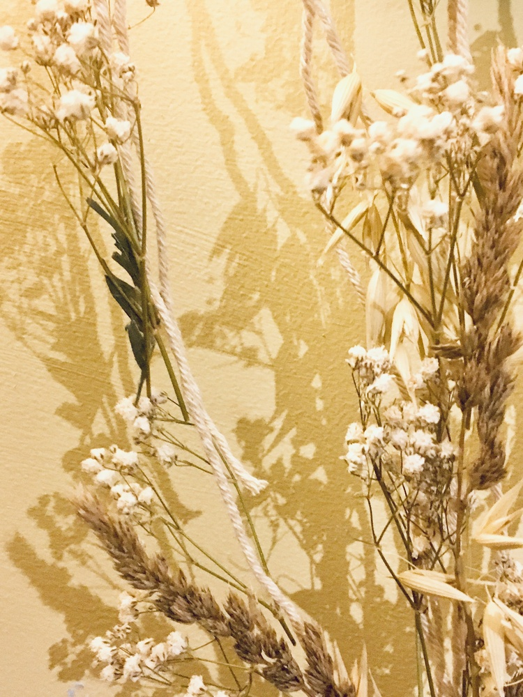 Shadows and flowers by Jo Martin