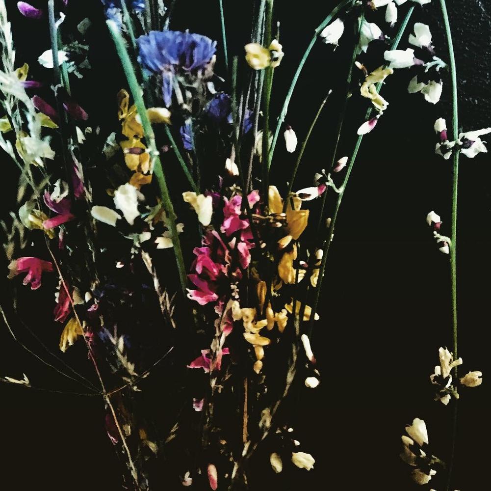 Flower shot by Jo Martin