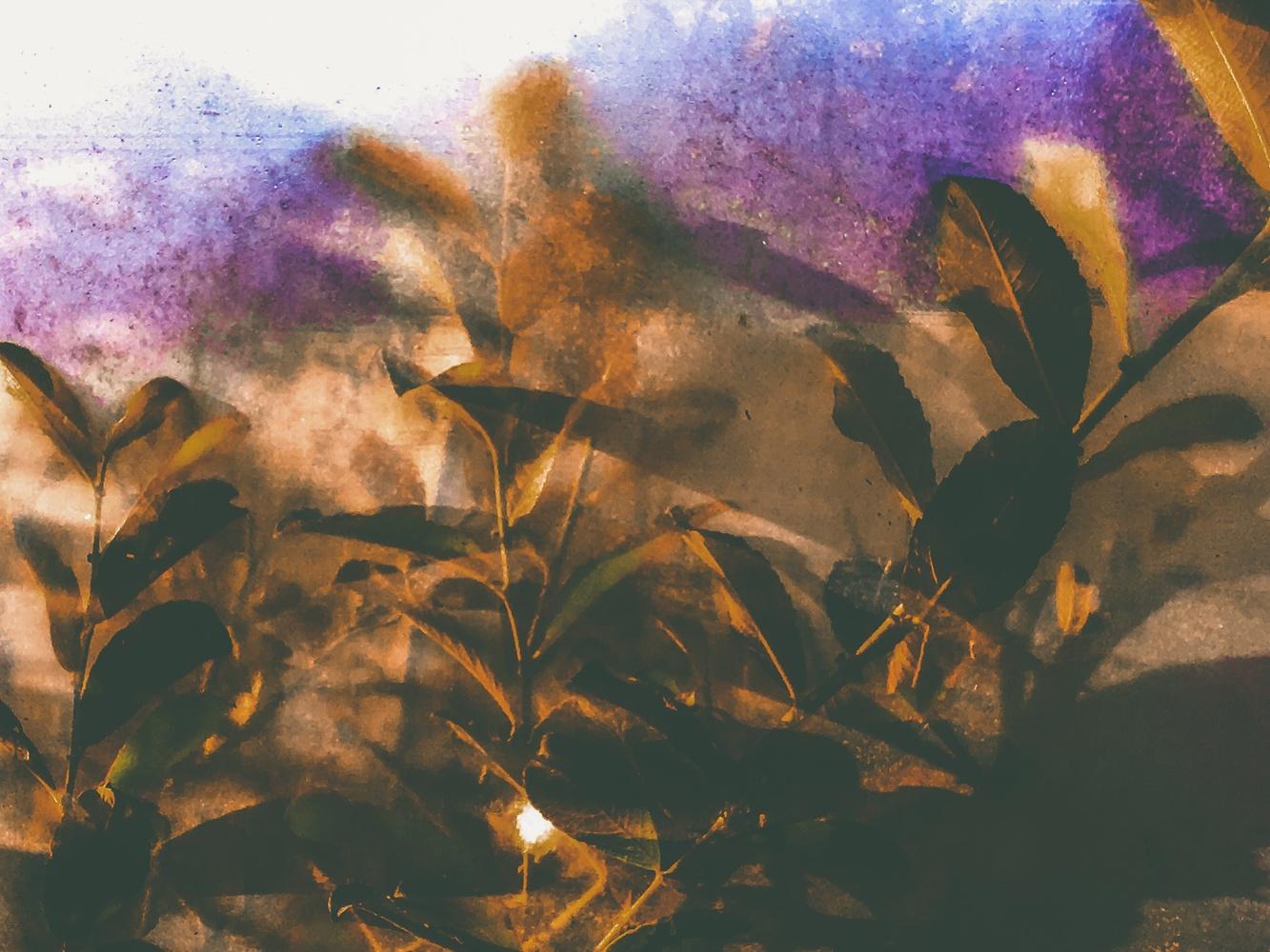 Hazy leaves by Jo Martin