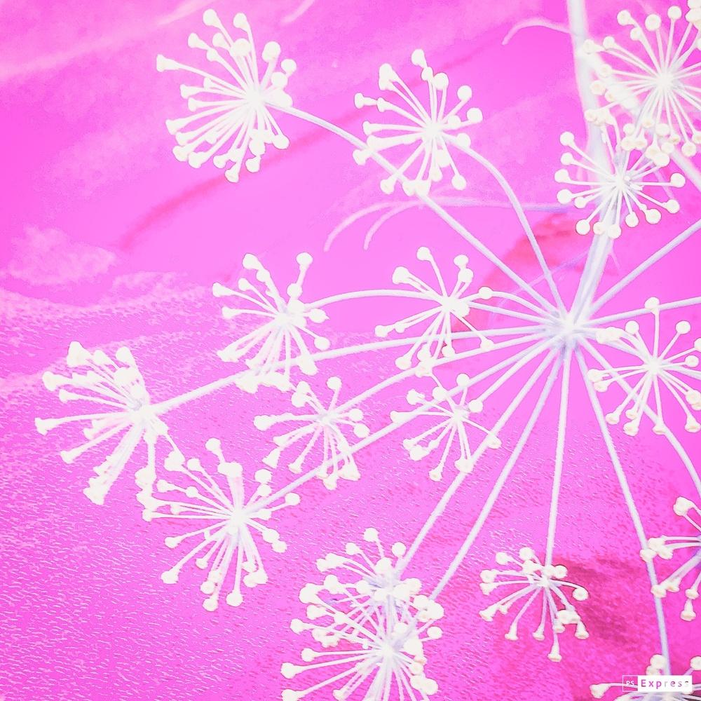 Fennel in pink by Jo Martin