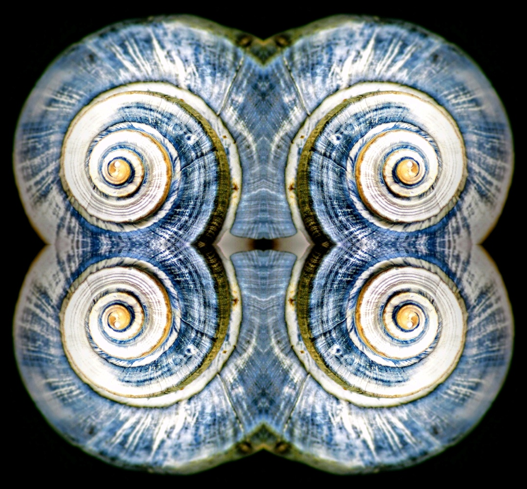 Shell Abstract Blue 2 by Ruth Carll