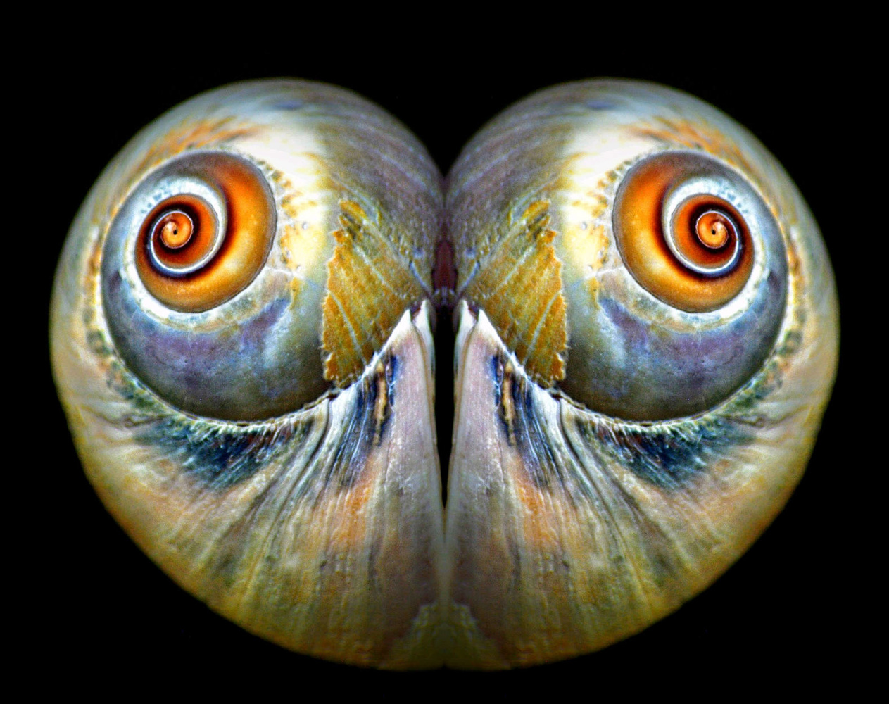 Owl Eyes Abstract by Ruth Carll