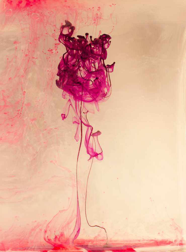Faded Rose by Ruth Carll
