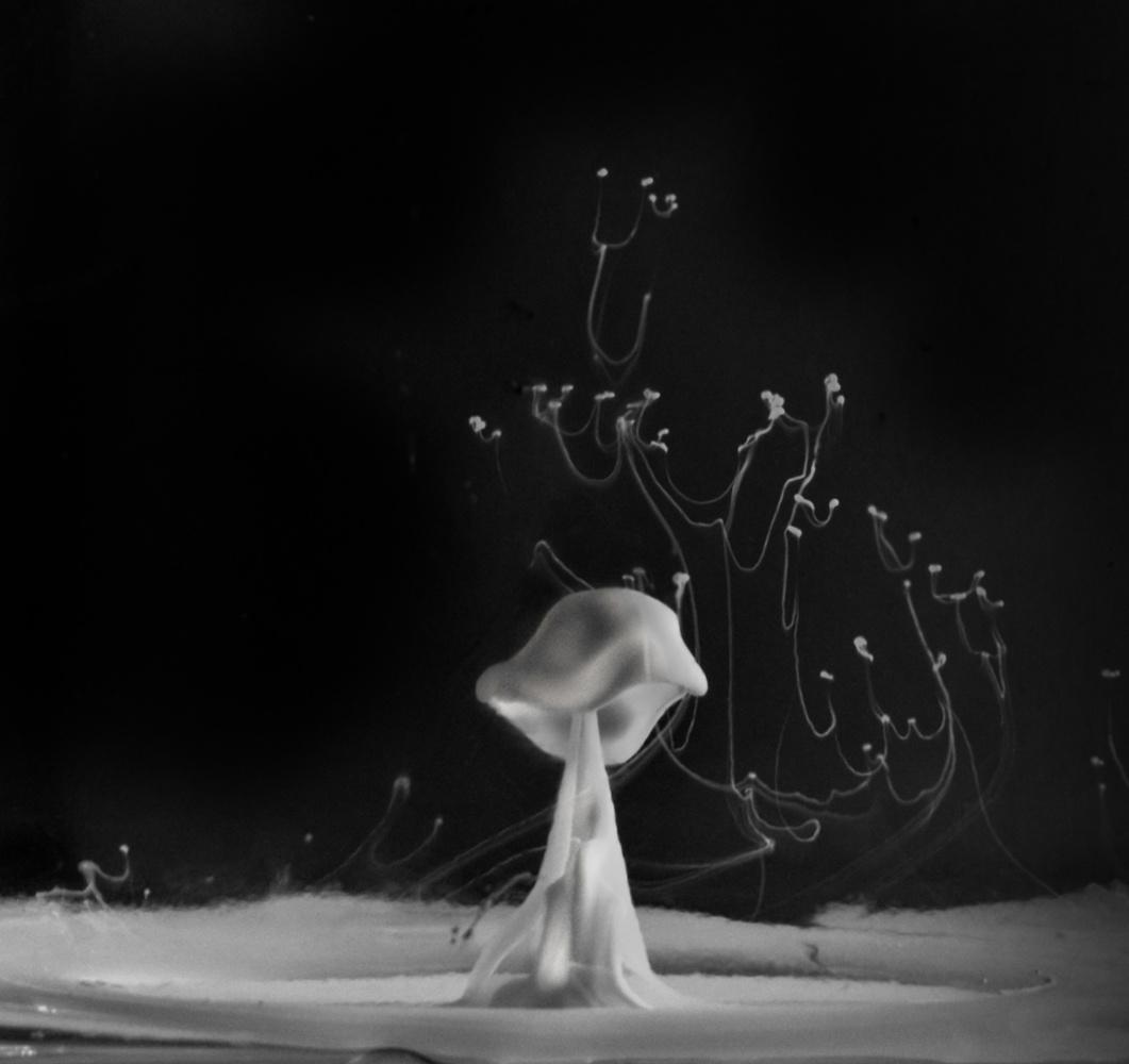 Ghost Mushroom by Ruth Carll