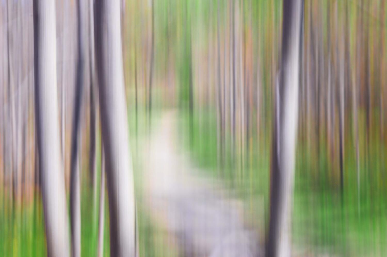 Spring Trail by Ruth Carll