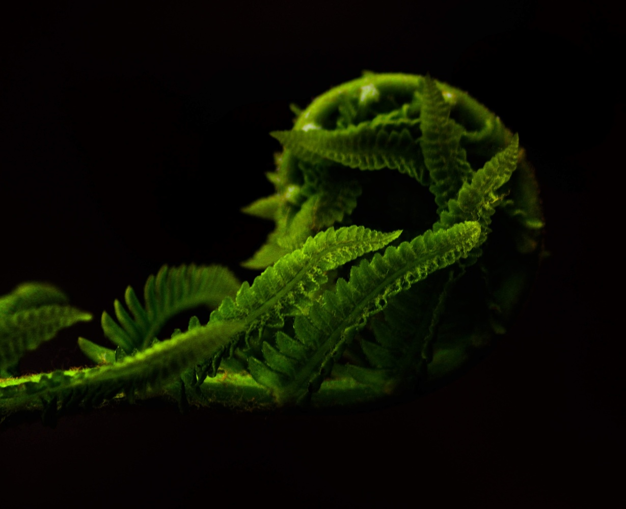 Ferns by Ruth Carll