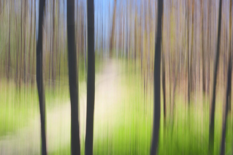 Weitz Trail by Ruth Carll