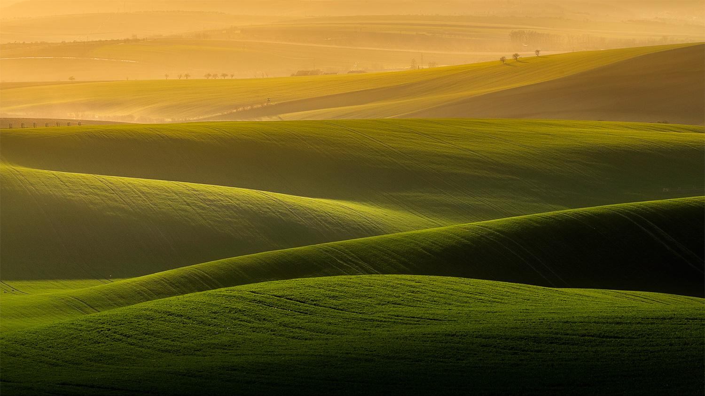 Green velvet by Danijel Turnšek