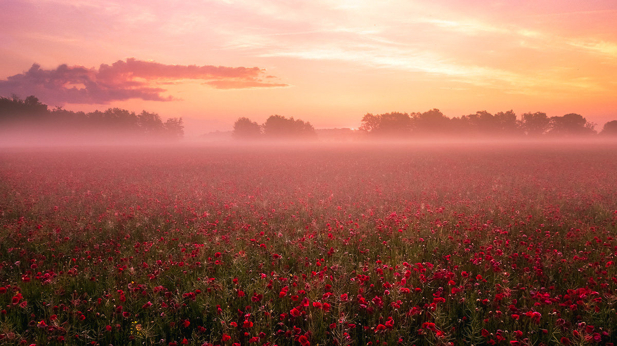 Red carpet by Danijel Turnšek