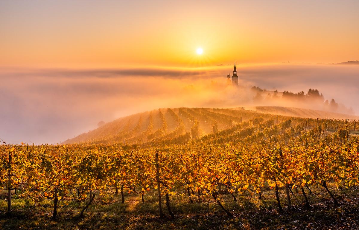 Golden morning by Danijel Turnšek