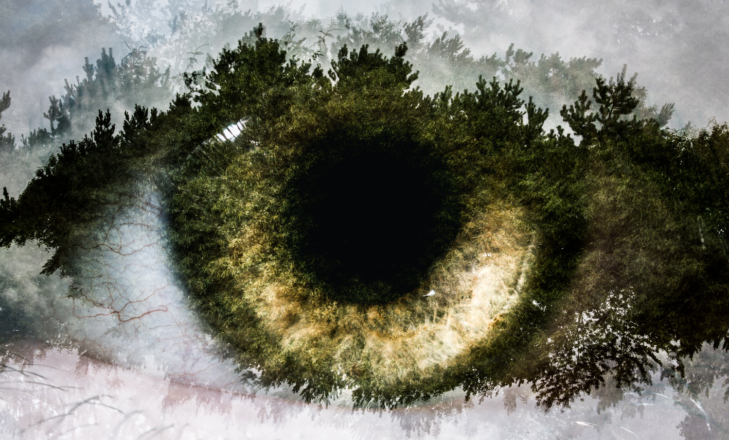 Eyes - The Forest by Ben Dauré