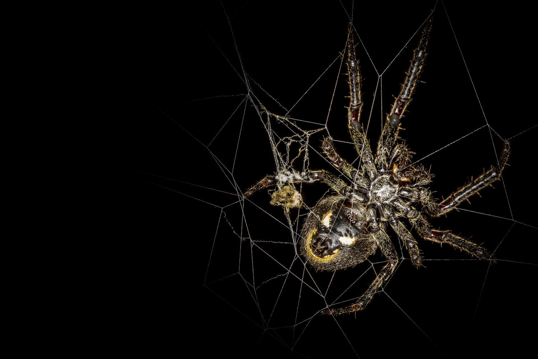 Spider by Sobanski Wojciech