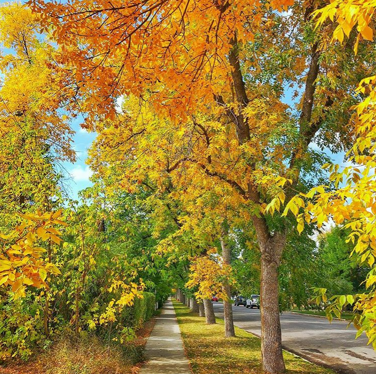 Fall Colors by Al Perreault