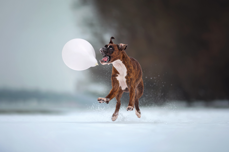 Attack on the balloon by Tamás Szarka