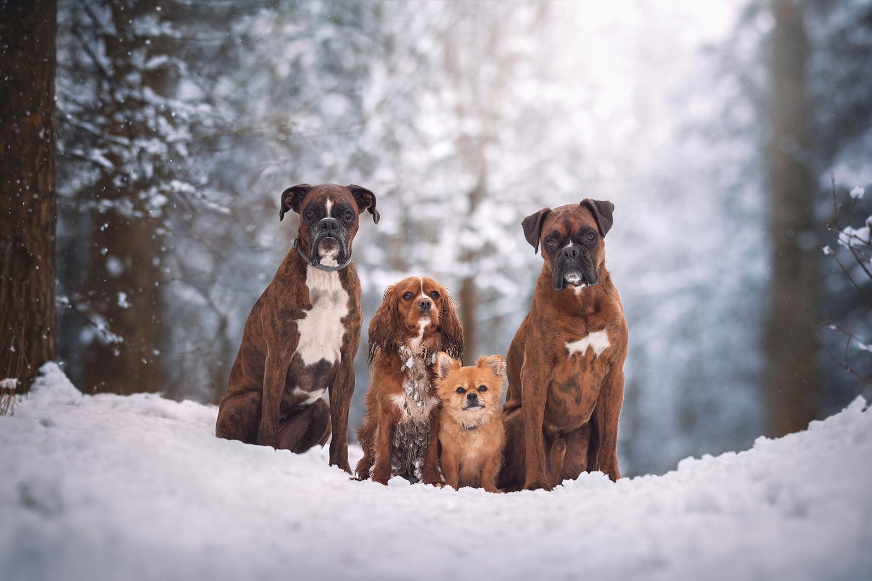 The Gang by Tamás Szarka