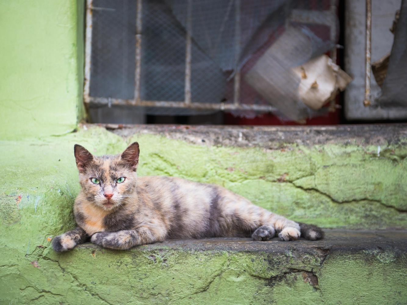 The street cat of Cartagena by David Mitchell
