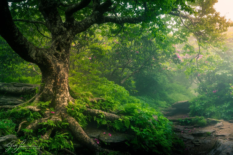 Craggy Garden Morning by Greg Sarver