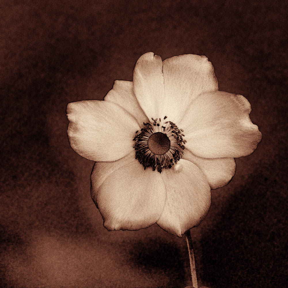Flower by Eric Hiss