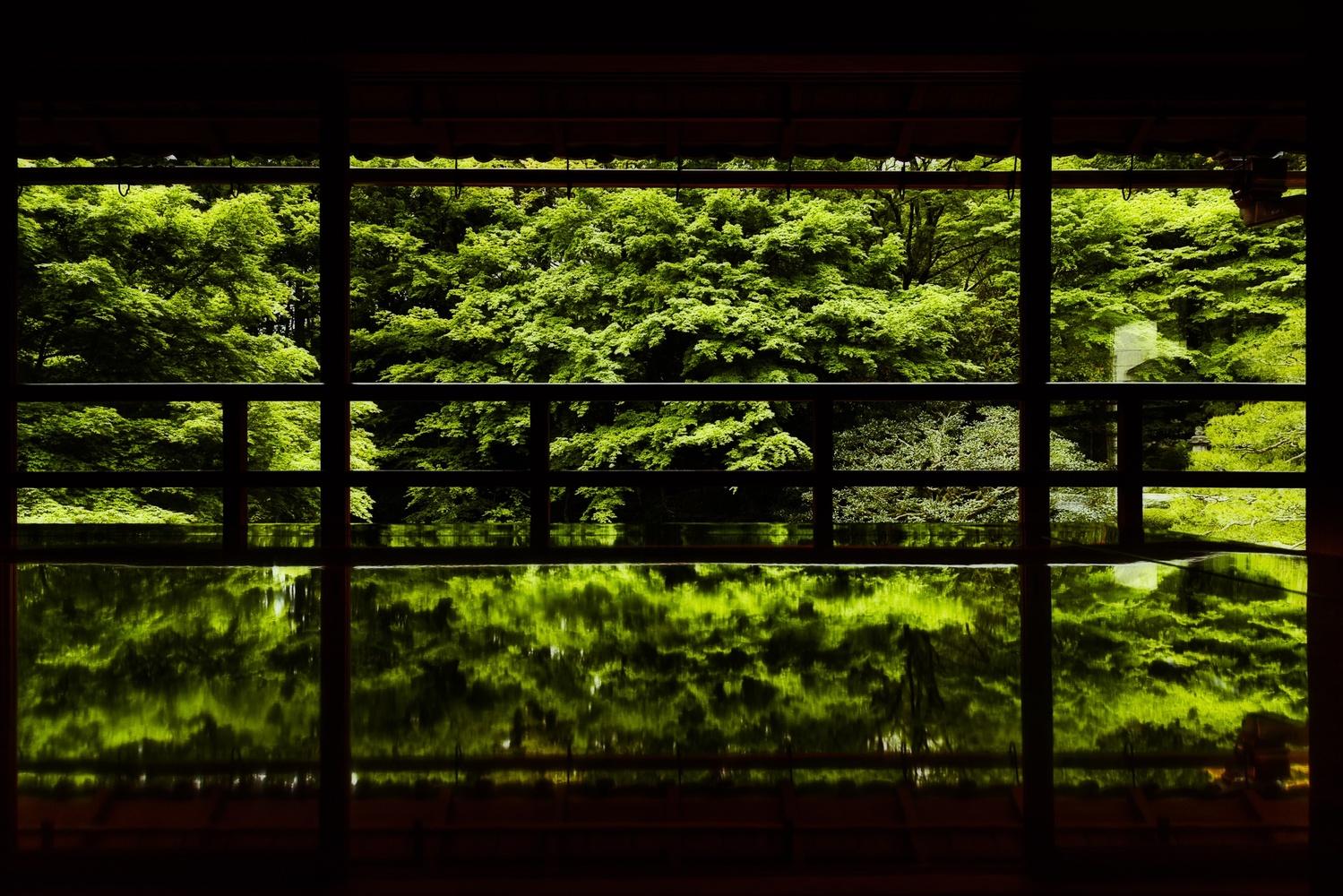 Fresh green by Masataka Inada